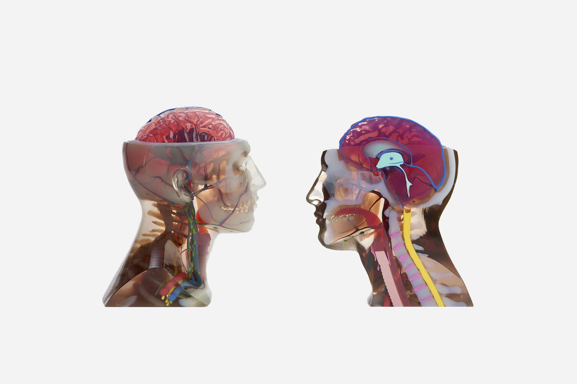 صنعت پزشکی برای ساخت مدل های آموزشی پزشکی از پرینت تمام رنگی متریال جتینگ استفاده می کند.