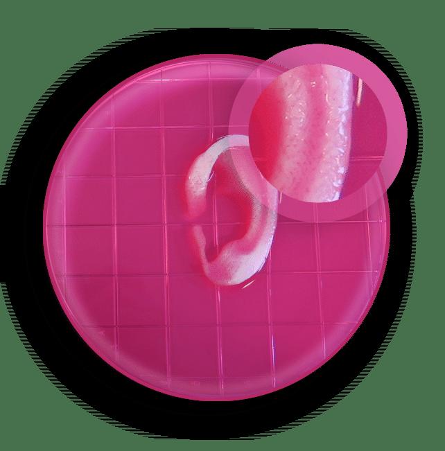 پرینت سه بعدی بافت زنده