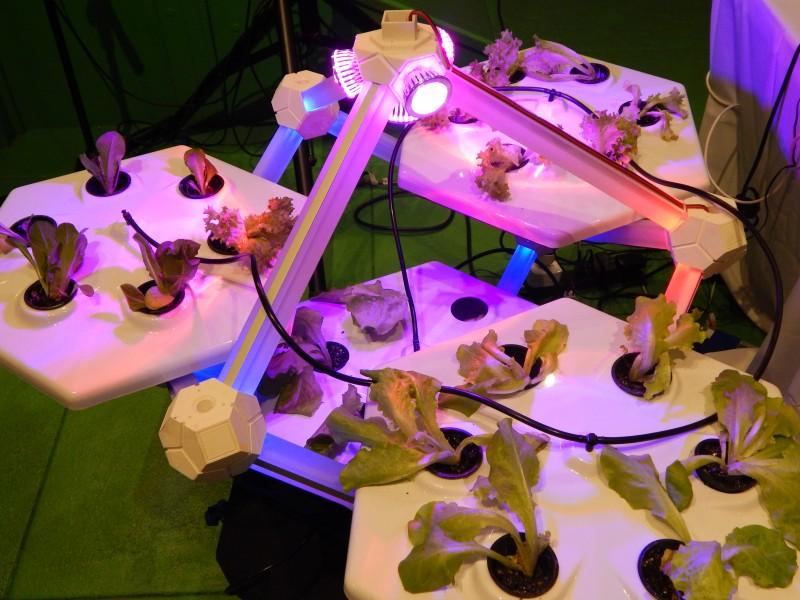 پرینتر سه بعدی و اتصالدهندههای رشد گلهای باغچههای خانگی